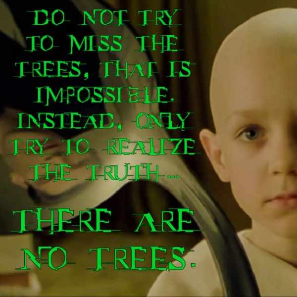 There are no trees