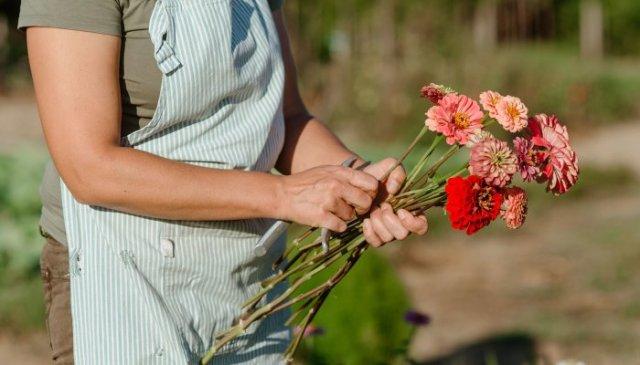 Design A Cut Flower Garden Using These Pro Tips Amp Starter Plants
