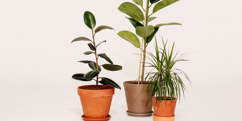6 Ways To Find Cheap Houseplants From Plant Swaps To Propagation