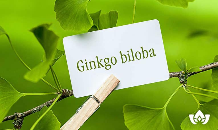 ginkgo bilob leaf benefits for health | Mindful Healing | Mississauga Naturopathic Doctor