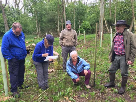 group of people doing woodland survey