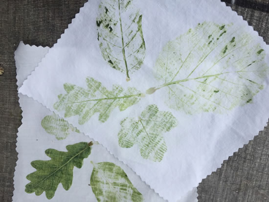 imprint of leaves on cloth