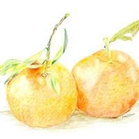 Mandarin Orange or Tangerine (Citrus tangerina)