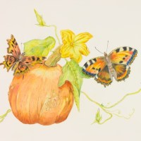 Pumpkin with Autumn Butterflies