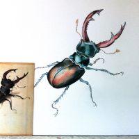 Stag beetle, Lucanus cervus