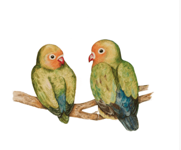Lovebirds by Paula Kuitenbrouwer Art Print of Pencil Drawing is available at Etsy.