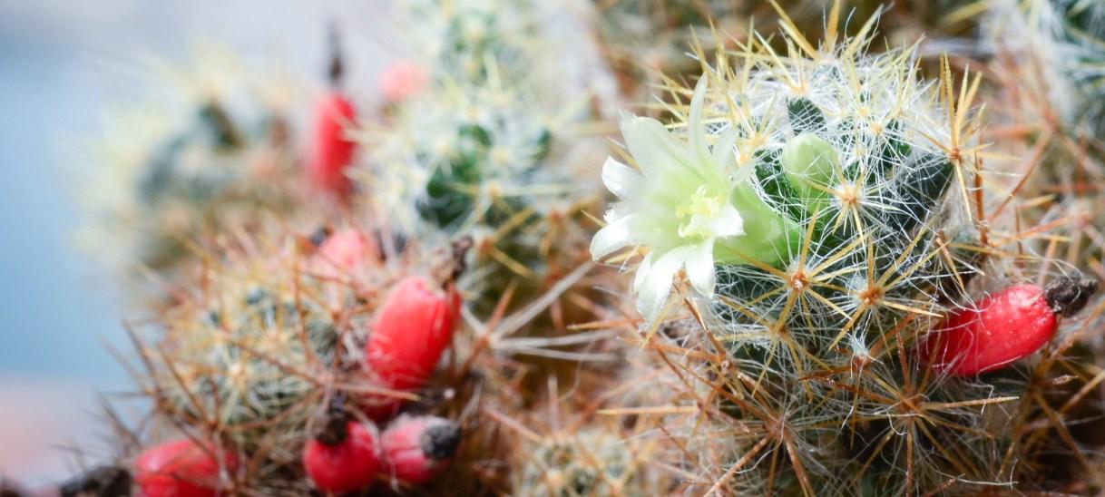 The Wisdom of a Cactus Flower