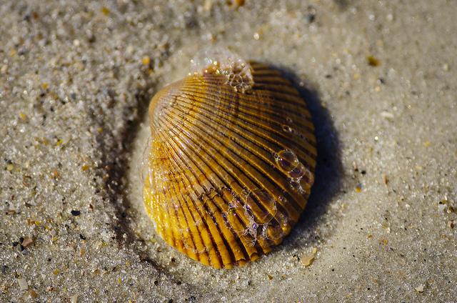 Spring vacation - shell image via photopin cc