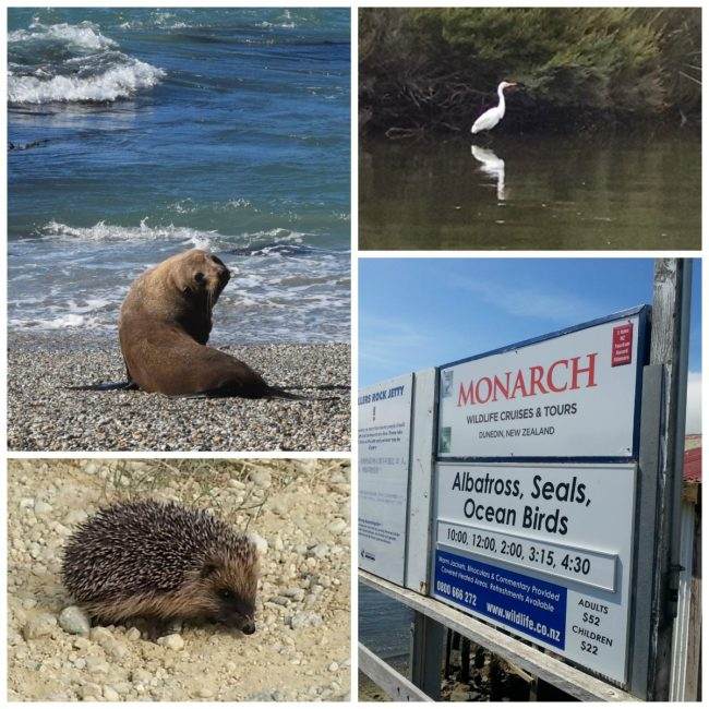 Wildlife in New Zealand // www.mindfulmomma.com
