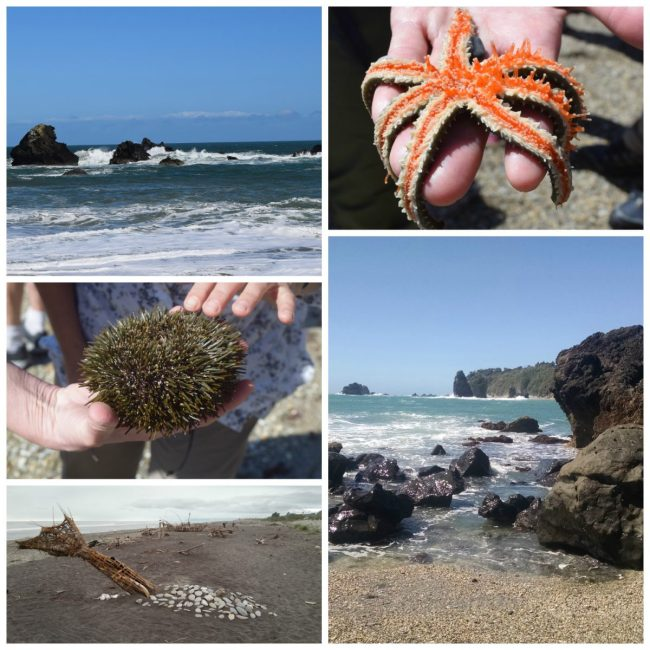 Beach in New Zealand // www.mindfulmomma.com