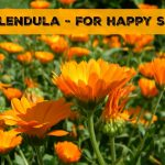 Why Calendula Is Great For Skin