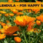 Why Calendula Is Great For Skin