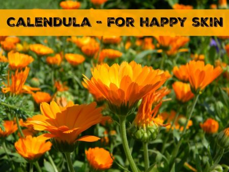 Calendula for Happy Skin // www.mindfulmomma.com