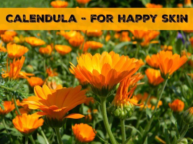 Calendula for Happy Skin // www.mindfulmomma.com