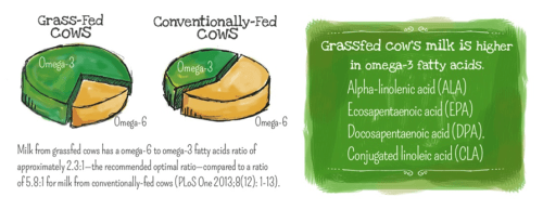 Why 100% Grassfed Matters // www.mindfulmomma.com