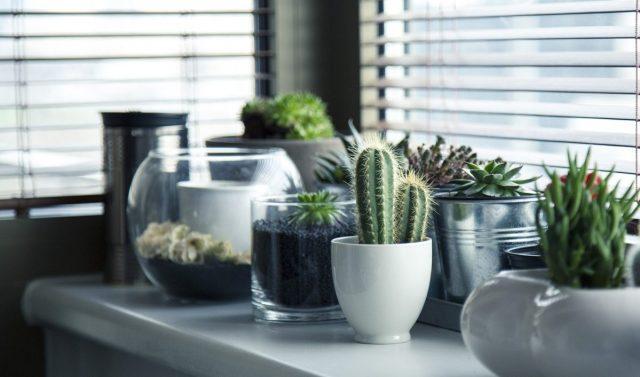 house plants on shelf