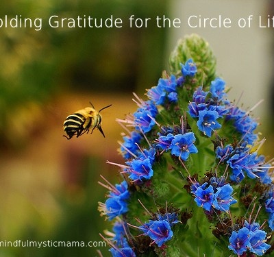 Holding Gratitude for the Circle of Life – A Meditation