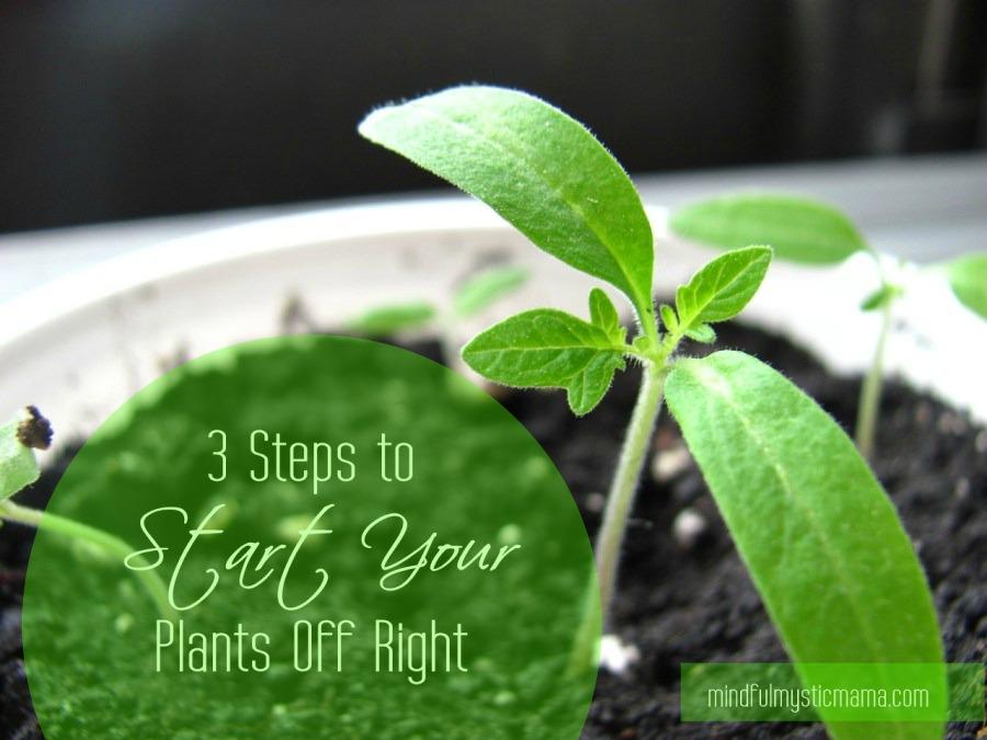 starter plants