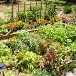 Garden permaculture for blog