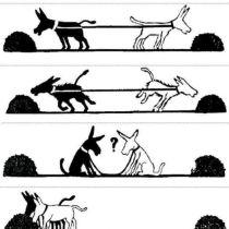 Samenwerken?