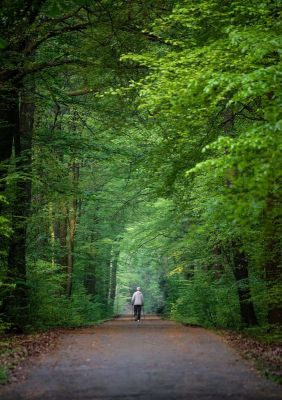 4-daagse Mindfulness zomer Intensive in Oosterbeek