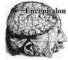 encephalon_logo.jpg