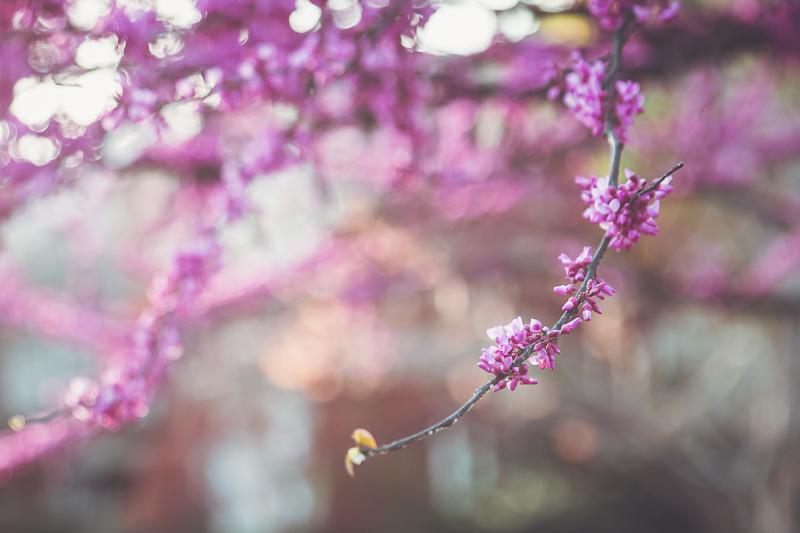 The Spirit of April