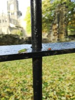(Close-up) Kirkstall Abbey