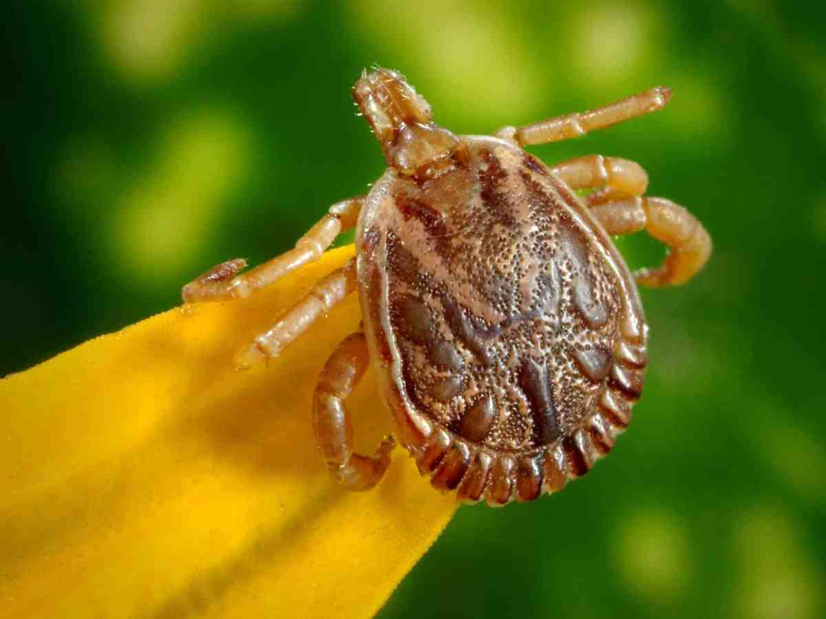 Ticks 101: Lyme Disease Prevention and Tick Removal Kit