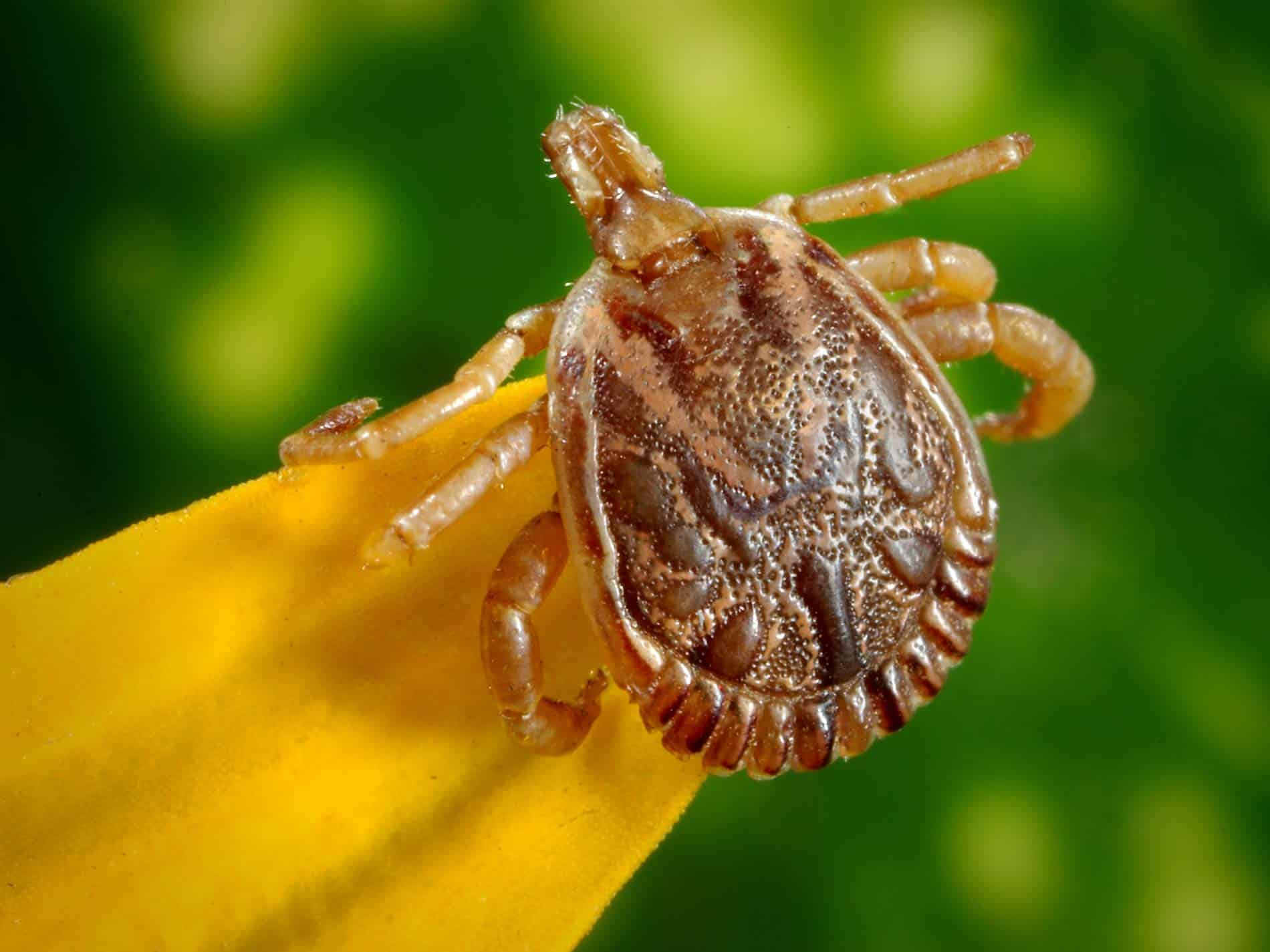 Ticks 101: Lyme Disease Prevention and Tick Removal Kit | Mind Over ...