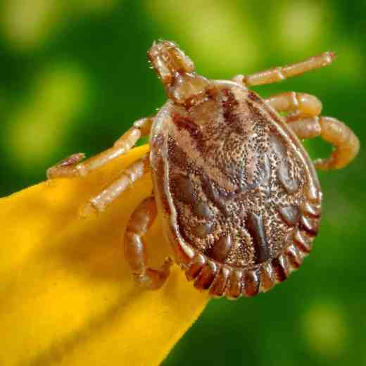 Lyme Disease Prevention and Tick Removal Kit