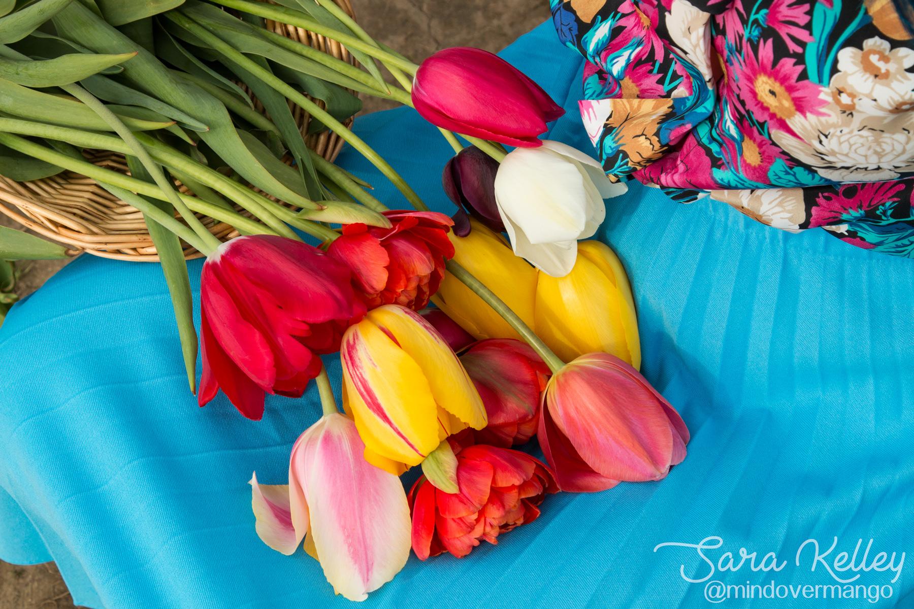 Tulip Flower Farm Rhode Island