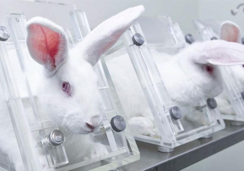 EU Animal Testing 2020 Pregnant Rabbits
