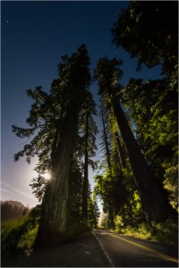 The full moon rises behind towering redwoods on the Avenue of the Giants in the Eel River valley.
