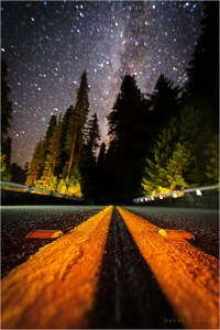 Ground-level view down the Avenue of the Giants beneath the starry sky.
