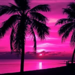 pinkpalmtrees