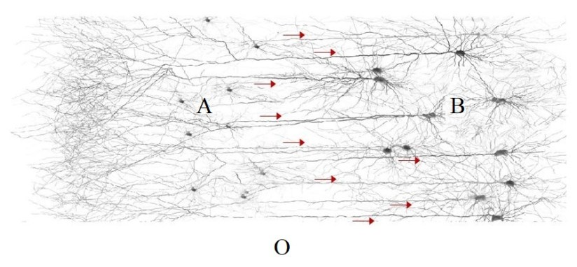 How signaling patterns can be qualia