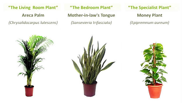 растения, очищающие воздух