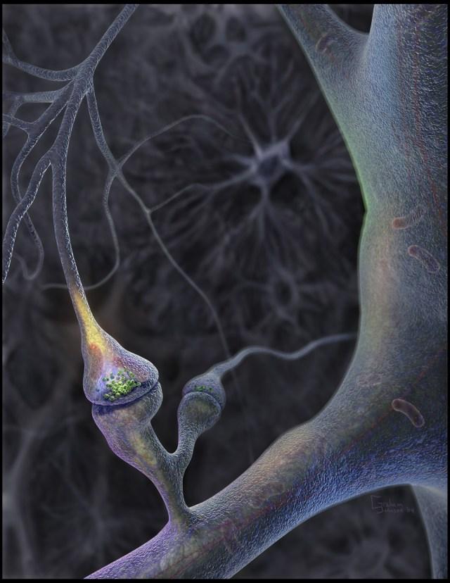 Нейрон готовится к передаче импульса