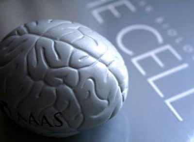 Нейропластичность, вызываемая тренировками памяти
