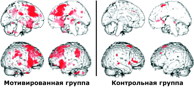 Активация мозга при ошибке с мотивацией и без нее