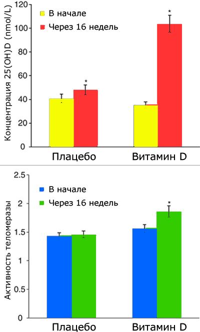 Рост активности теломеразы в связи с приемом витамина D