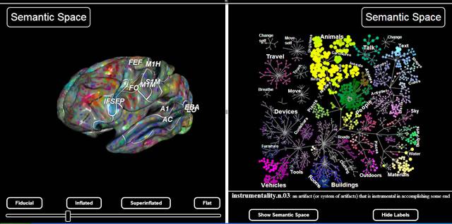 семантическая карта мозга