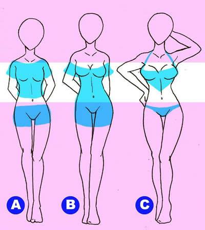 размеры бюста А, В и С