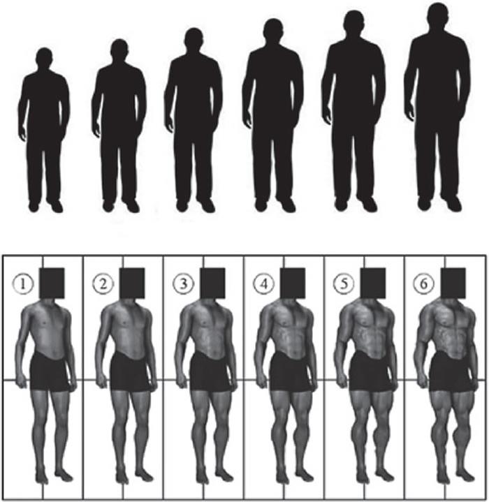 диаграммы для определения роста и телосложения