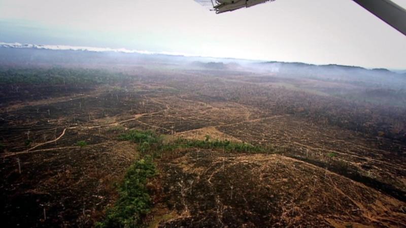 вырубка амазонских лесов