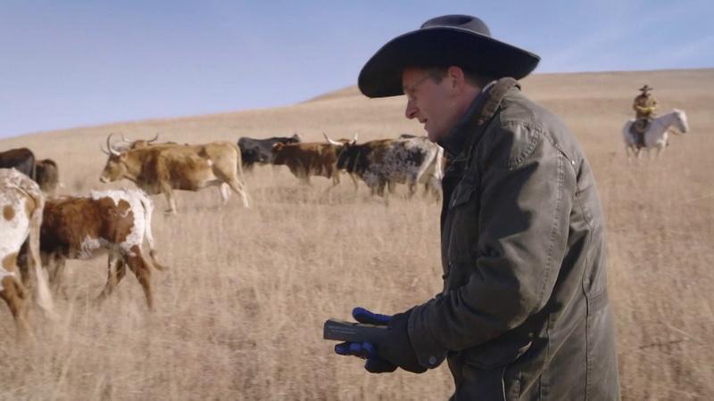 Майкл с газометром следует за коровами