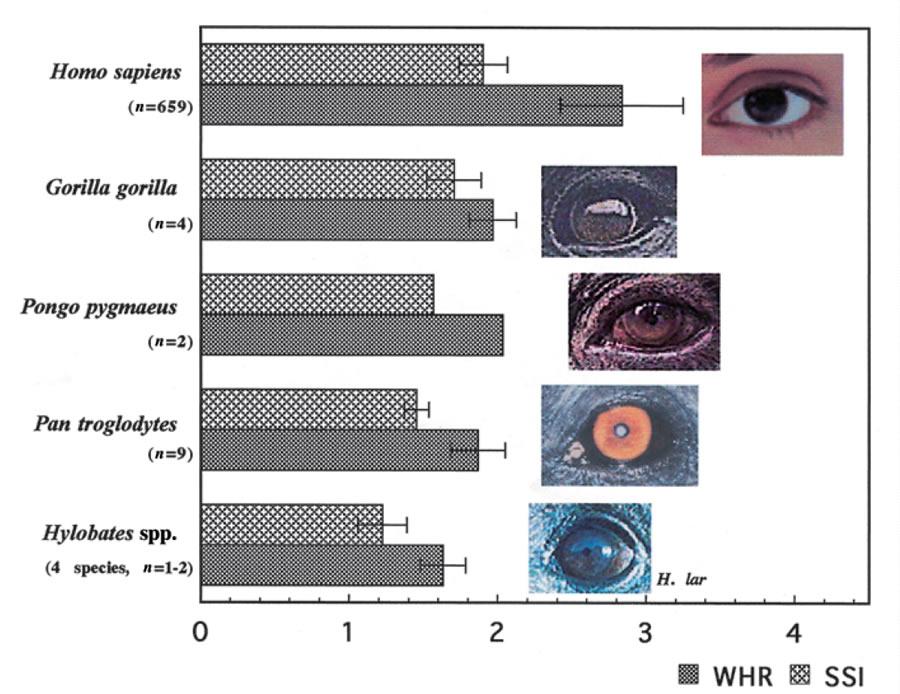 WHR-eyes