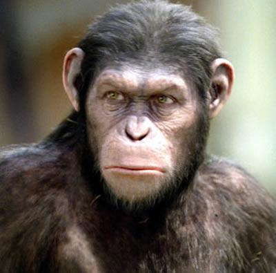 планета обезьян фото
