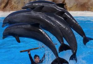 dalphin-big
